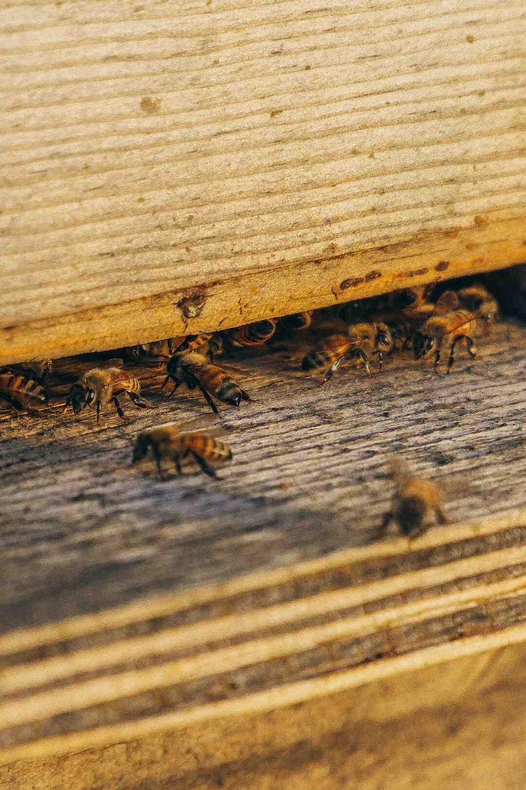 Comment enlever le dard d'une abeille