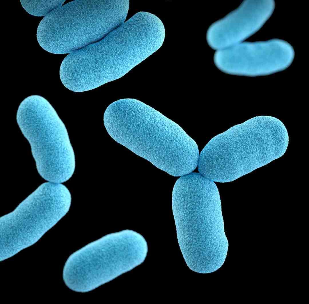 Comment se débarrasser d'une infection aux ankylostomes