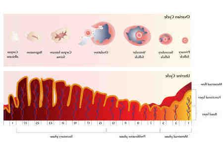 Comment induire l'ovulation naturellement